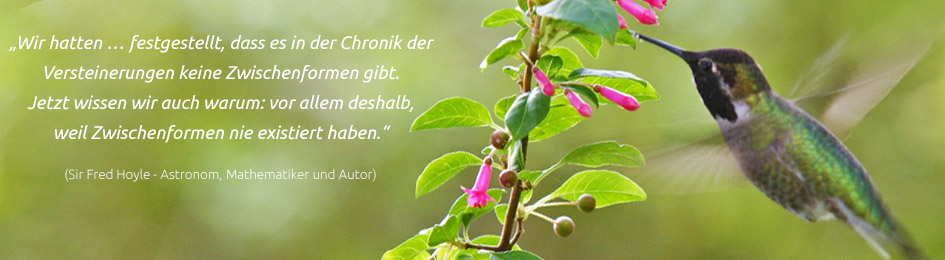 Image Result For Zitate Schopfung Bibel